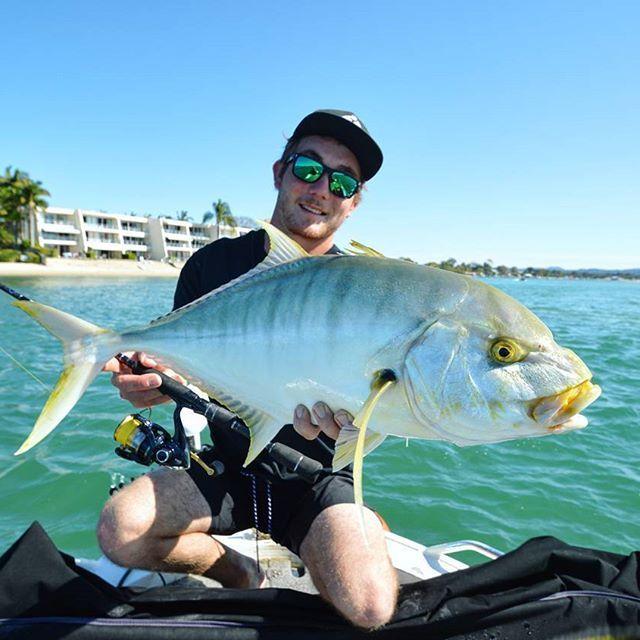 Golden  @jacksboric  Caught on Revo Inshore 2-4kg rod, Nasci 2000, 10lb Power Pro and 10lb Ocea Leader #fishshimano
