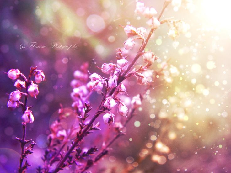 Touch of Light by Floreina-Photography on DeviantArt #flowers #plants #photography #bokeh #light #beautiful #lovely #dreamy #finland #scandinavia #kukkia #valo# #valoa #suomi