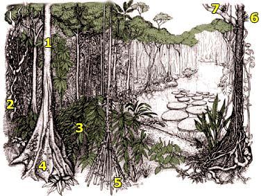 14 best images about Rainforest Region on Pinterest | The amazing ...