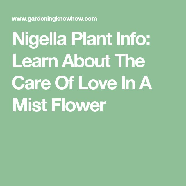 Nigella Plant Info: Learn About The Care Of Love In A Mist Flower