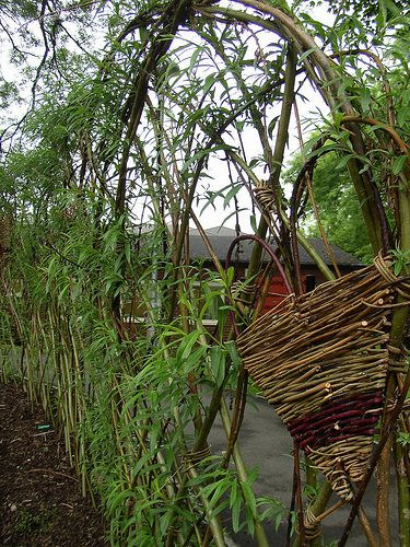 living willow fence/hedge  LOVE the design!! Oh, I really want to do this one!!