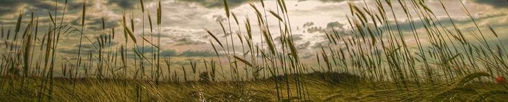 Asociacion civil sin fines de lucro que promueve el cuidado y preservación del medio ambiente canalizando y vinculando la disponibilidad e intereses de estudiantes, organizaciones e individuos a traves del trabajo de voluntariado y multidiciplinario, información y asesoria en linea en cuestion ambiental y de sustentabilidad.  http://viveverde.org/