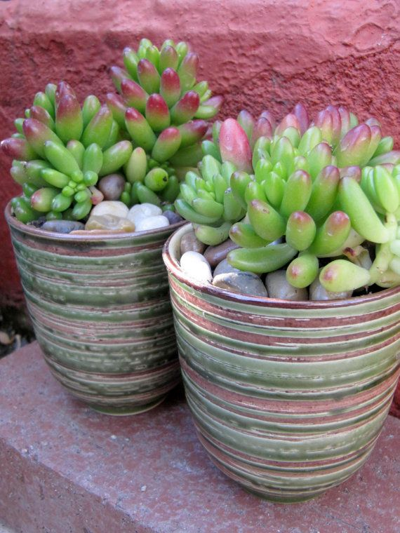 Beautiful Potted Succulents in Green and Brown Tea Cups