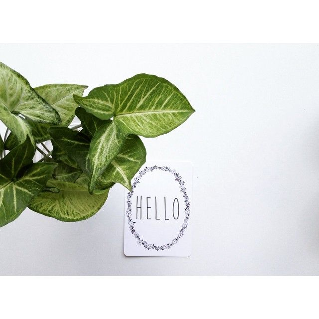 W E E K E N D // This little guy just makes me happy // shop www.tleafcollections.com.au #helloweekend #hello #stationery #prints #wallart #ilovepaper #notepaper #shopsmall #onlinestore #brisbane #madeinfrance #tleafcollections #minimelinsta