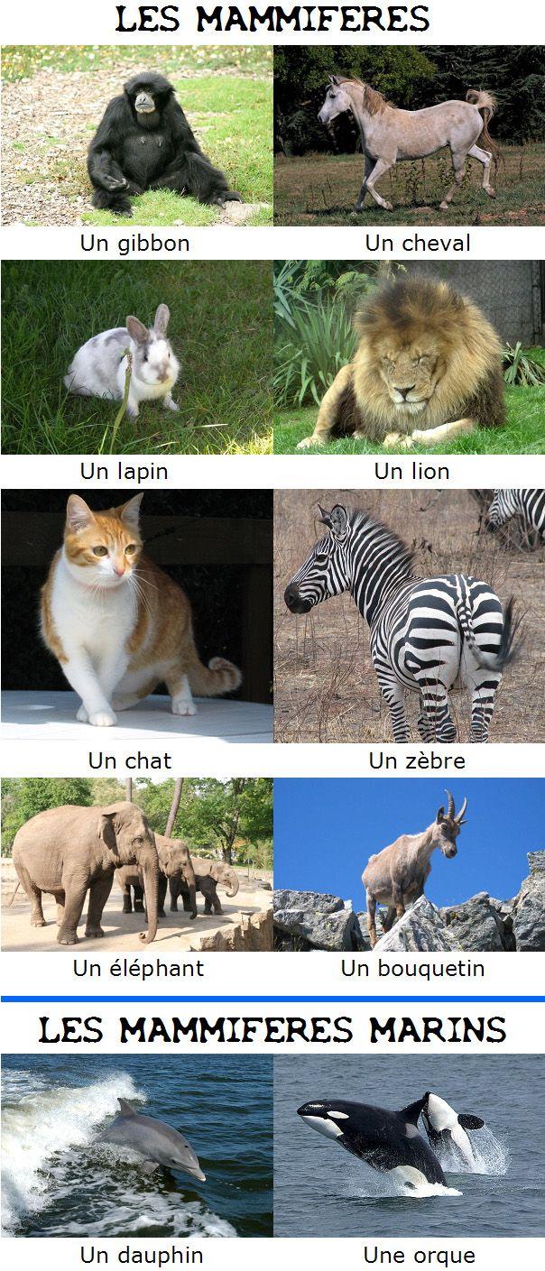 """LA CLASSIFICATION DES ANIMAUX On distingue les vertébrés (animaux qui possèdent un squelette) et les invertébrés (qui ne possèdent pas de squelette). Ensuite, pour classer les animaux en """"familles"""", on doit prendre en compte plusieurs critères : Par quoi..."""