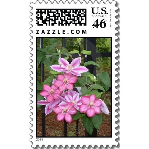 Striking Pink Clematis Flowers Postage Stamps #clematis #flowers #pink #postage #stamps #art #floral #zazzle #photography #petspower