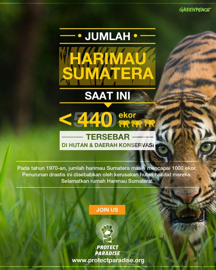 Sejak tahun 1970 hingga kini, jumlah harimau Sumatera telah menyusut hampir 60%, kerusakan hutan adalah penyebab utamanya. Jangan biarkan mereka punah menjadi catatan sejarah.  Selamatkan hutan dan harimau Sumatera sekarang! www.protectparadise.org