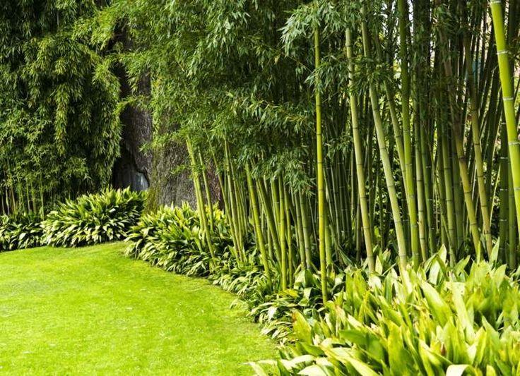 Une Haie De Bambou