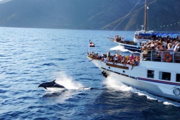 A boat ride in Skiathos island