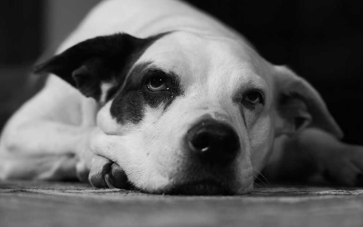 DEC 20/17--What the suspension of certain sections of the Montreal Animal Bylaw really means. By Linda Hammerschmid
