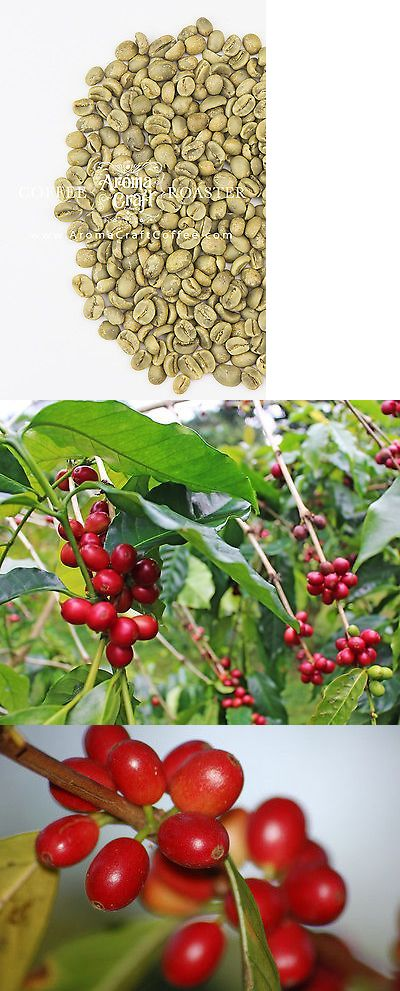 Coffee Beans 38179: El Salvador Santa Rita Shg Unroasted Green Coffee Beans Washed Up To 20 Lbs -> BUY IT NOW ONLY: $52.99 on eBay!