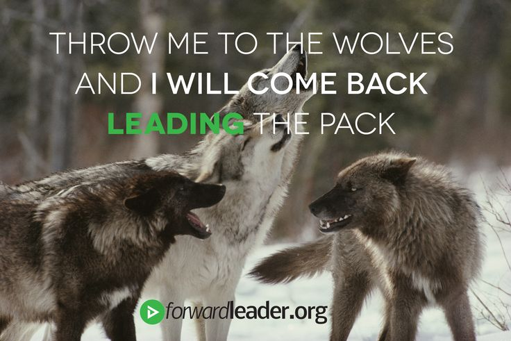 Throw me to the wolves and I will come back LEADING the pack. #quote #leadership #forwardleader