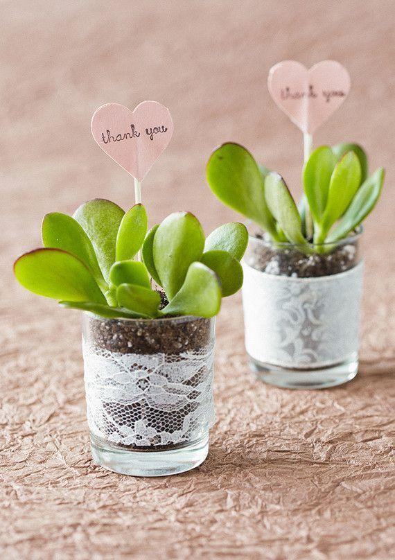 mini plant favors with lace trim.