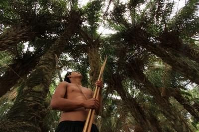 Tipnis (Territorio Indigena Parque Nacional Isiboro Sécure) se defiende.  Por: Samy Schwartz