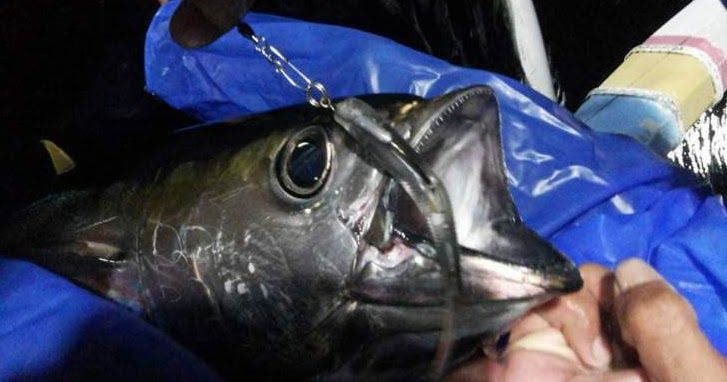 http://www.mediapancing.com/2016/07/casting-yellowfin-tuna-menggunakan-soft-lure.html
