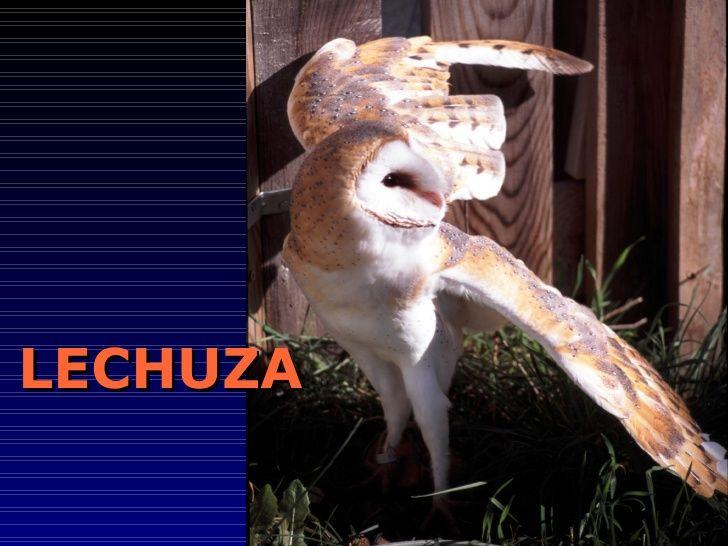 LECHUZA     REAL