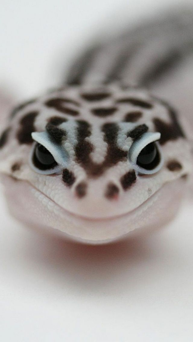 PICS ~ up close and personal with this smiley leopard gecko