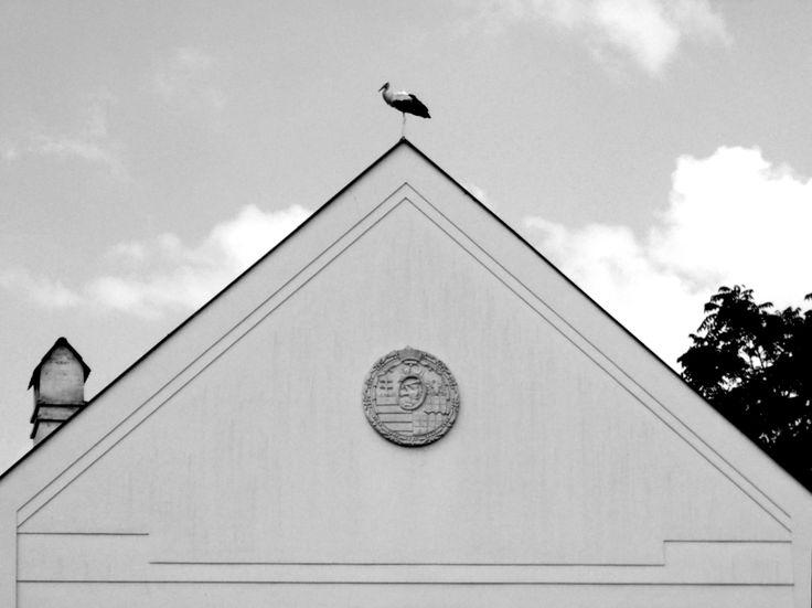 Stork on the roof in Bodrogkeresztúr