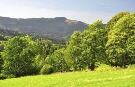 Bildergebnis für Böhmerwald