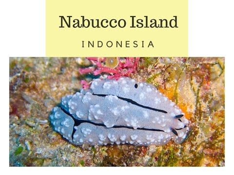 The Nabucco island is a beautiful private island located in the lagoon of Maratua, at the eastern coast of Indonesian Borneo, an underwater paradise of incomparable beauty. The dive sites around Nabucco are captivating due to their biodiversity and the nu