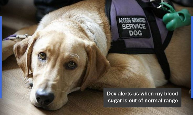When diabetes care gets overwhelming, a Diabetic Alert Dog is your answer. Learn what makes SDWR the leading Diabetic Alert Dog provider.
