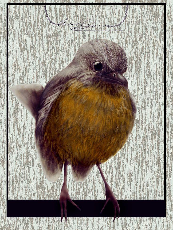 Robin the Bird on Behance