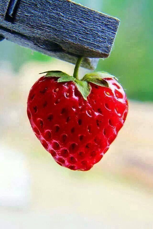 Iphone Sayings Wallpaper Heart Shaped Strawberry Bokeh Photography Strawberry