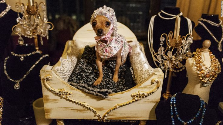 fashion+show+new+york   dog shows off its jewelry at the New York Pet Fashion Show in New York ...