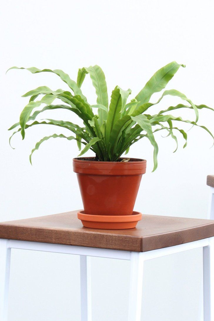 This Home Delivery Plant Company Will Turn Anyone Into A Plant Mama Indoor Plants Order Plants Online Buy Indoor Plants