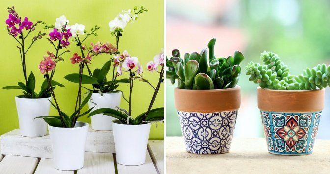 Plantas Decorativas Interior