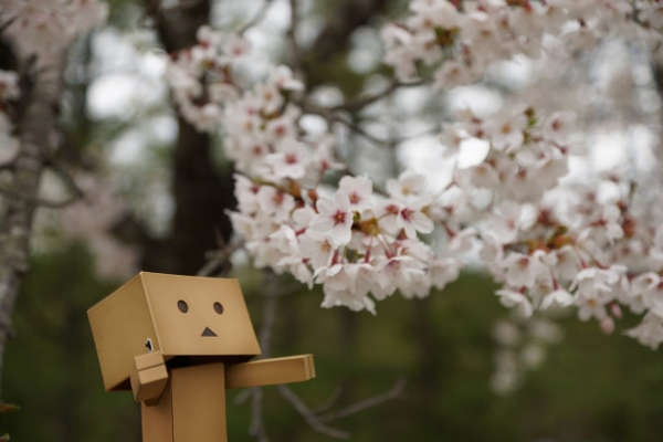 Little Box Man is exploring the World again! Vipper Sokuhous Toy Photography Depicts a Toy Experiencing the World