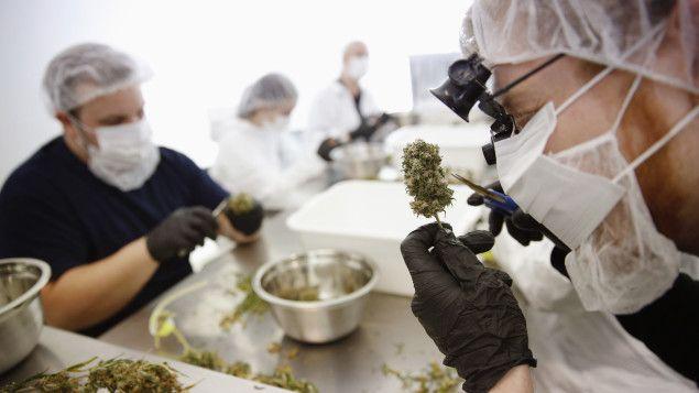 Un chercheur de l'Université de la Colombie-Britannique (UBC) est parvenu à isoler 30gènes au sein du génome du cannabis qui sont responsables de l'arôme et du goût de la plante. Une découverte qui pourrait permettre d'établir des normes gustatives comme dans l'industrie du vin, suggère le scientifique.