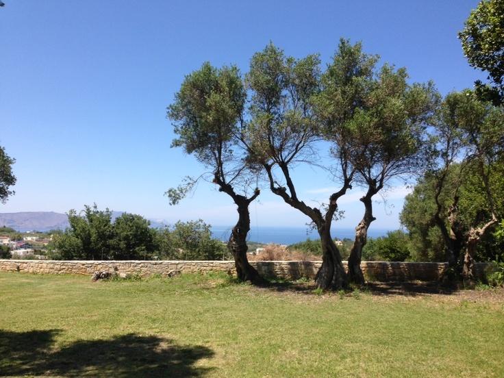 Villa Lucia's garden and trees around fresh air and sun! New taken photos 15/5/2013   http://villa-lucia.gr/