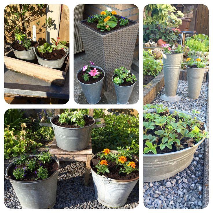 Zinken teilen, emmers en potten weer gevuld met bloemetjes . #tuin #garden