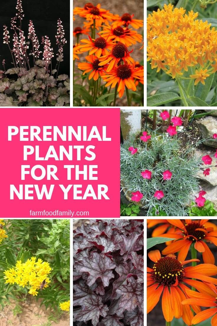 5 Best Perennial Plants For The New Year Plants Perennial Plants Best Perennials