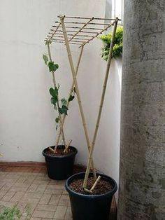 Interesting container gardening idea.