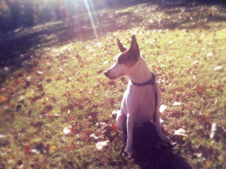 Enjoying autumn!