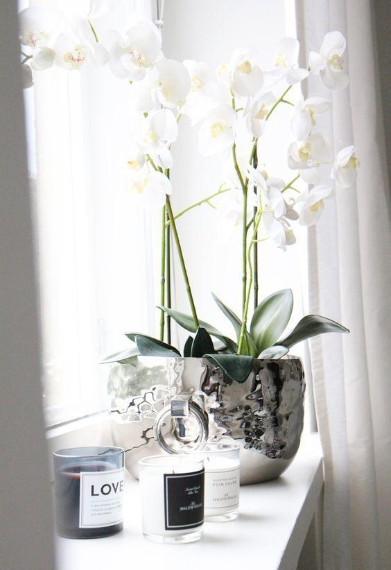 Les plantes fleuries sont un réel atout pour votre intérieur, en plus d'être colorées certaines dégagent un doux parfum pour une ambiance accueillante.