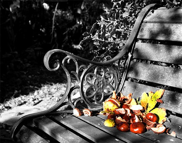 Best Black White W Color Accents Images On Pinterest - Black and white photography with color accents