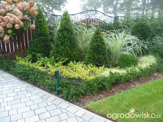 Anulajda w raju - strona 132 - Forum ogrodnicze - Ogrodowisko