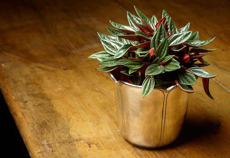 Porta vaso. Collezione Tulipano di Cosi Tabellini.