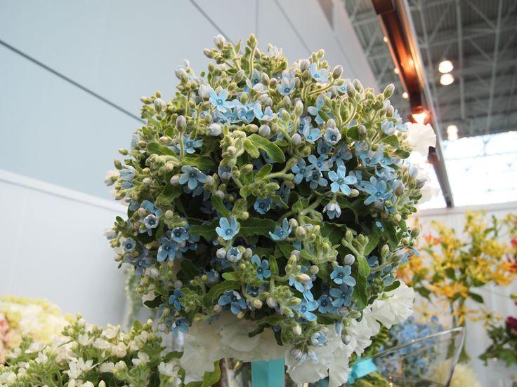 Tweedia Wedding bouquet.