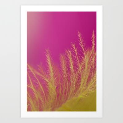 "#macro #dewdrops # feather    ""Softly"" Marisa M. Johnson Photography"