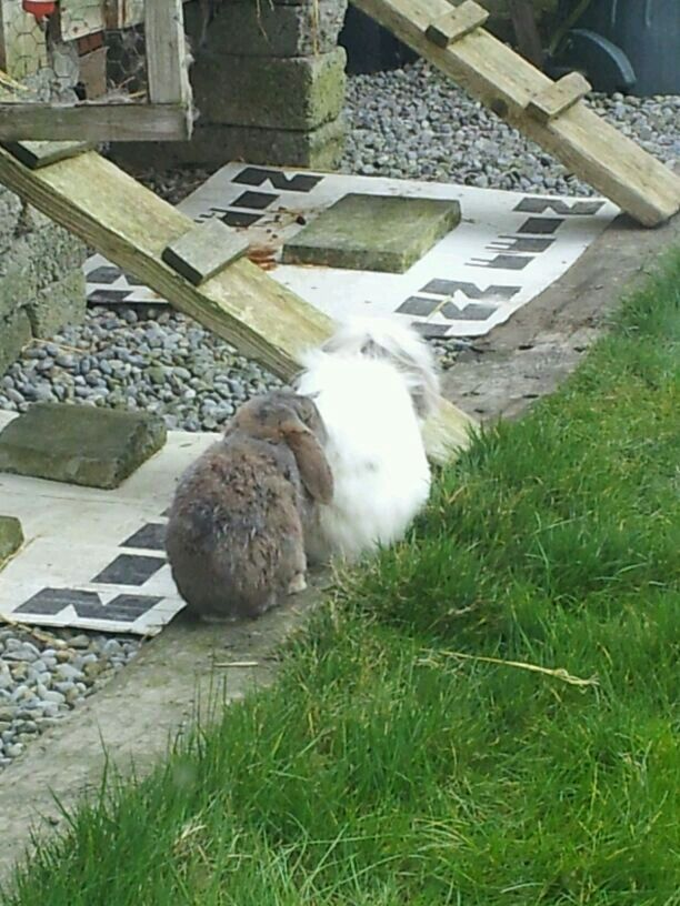 Form an orderely queue behind da bunny mupp!