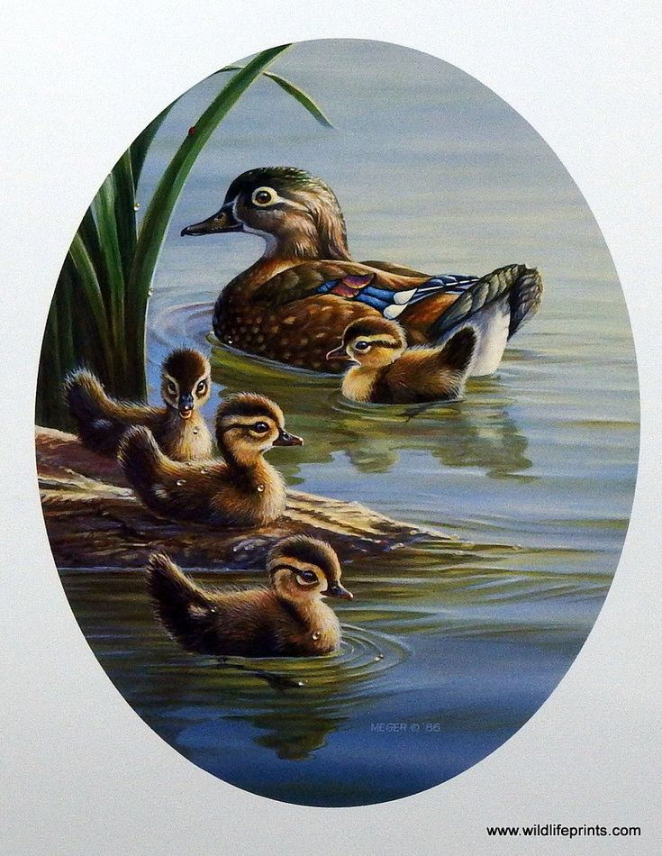 James Meger Pride and Joy | WildlifePrints.com