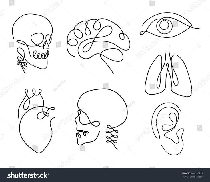 One line human organs set design silhouette.Logo d…