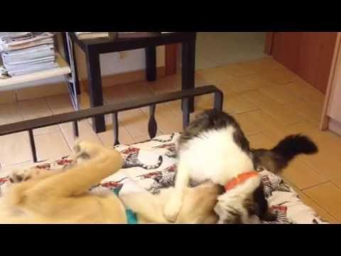 Cat wakes up dog