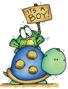 It's a Boy Turtle - CY868