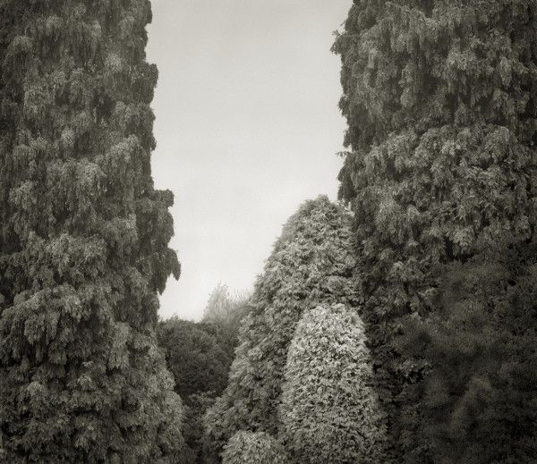 Beth Dow, Pinetum, Wakehurst Place - http://bethdow.com/website/in-the-garden/