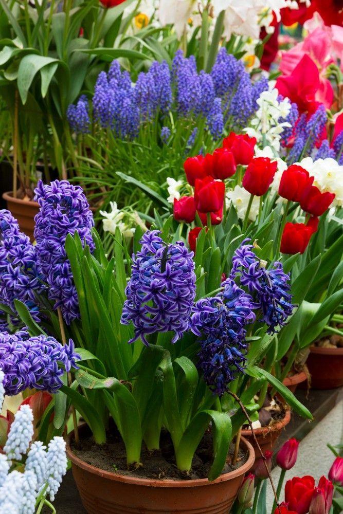 Bulbs에 관한 상위 25개 이상의 Pinterest 아이디어  다년생식물 ...